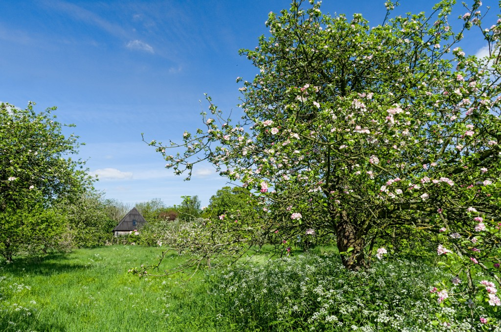The Orchard at Little Wittenham