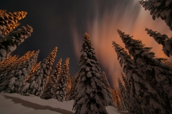 All Hail Treebeard