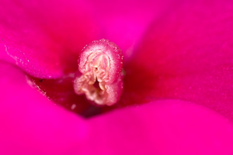 Vibrant Flowering Macro