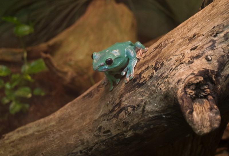 a frog at the zoo
