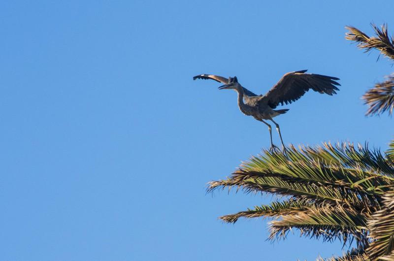 Heron Flight Takeoff