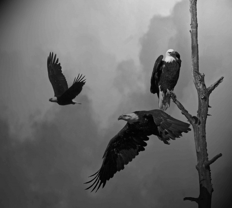 Eagles in the clouds
