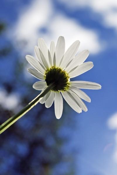 Underneath a daisy