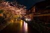 Sakura Illuminated