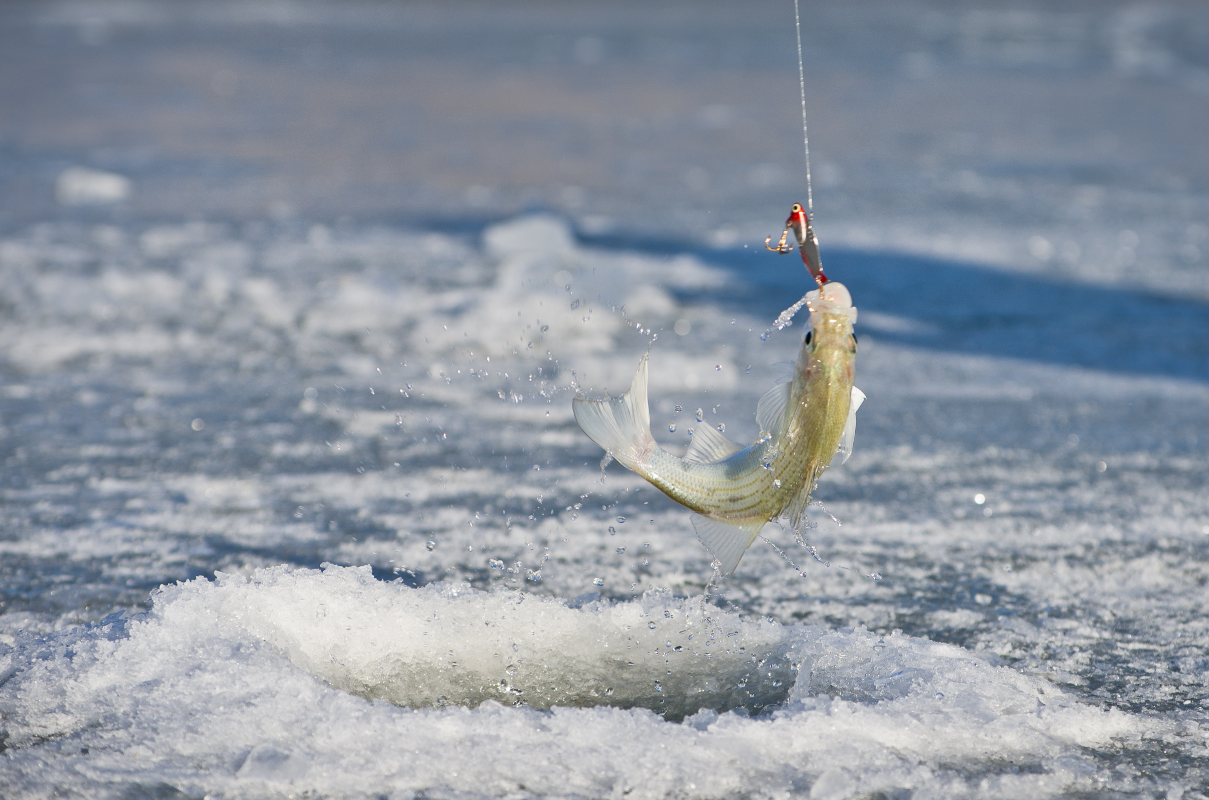 how to catch smelt ice fishing