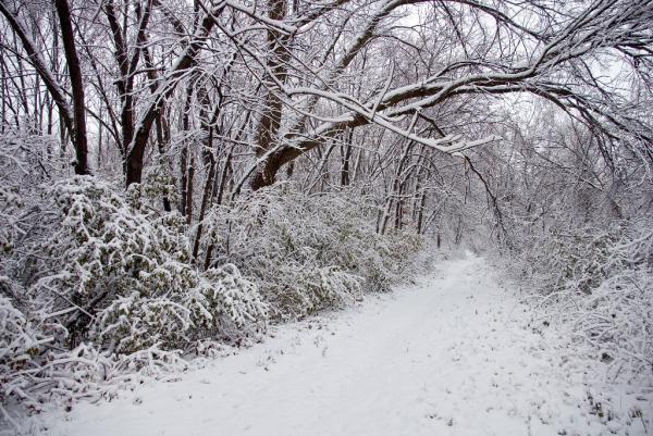 First Snowfall - Tampier