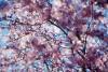More Plum Blossoms