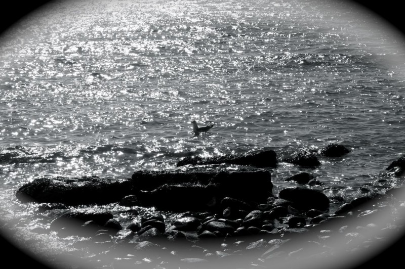 Eye on the Gull