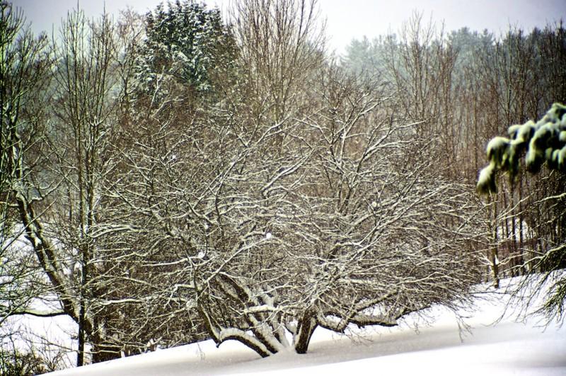 Last snow of the winter(?)