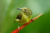 The alert small little bird