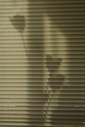 June Photo Contest: Shadows