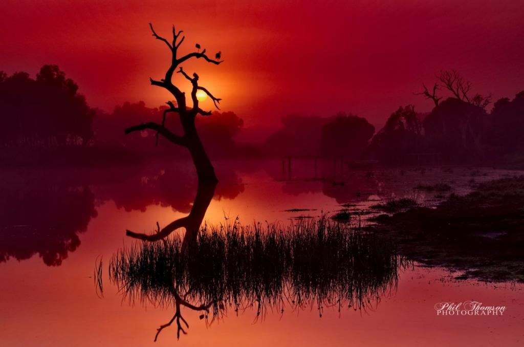 Merlot Dawn