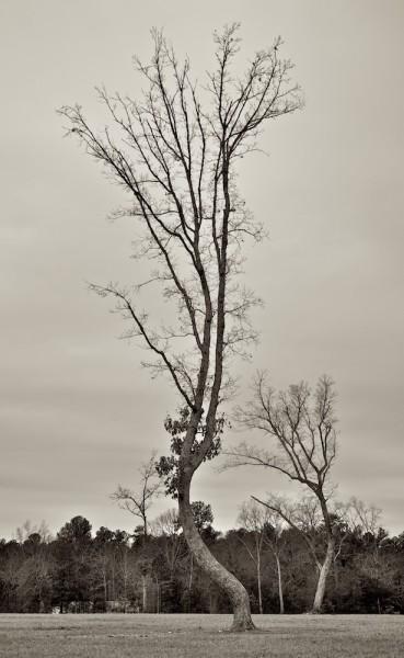 Upcurved Tree