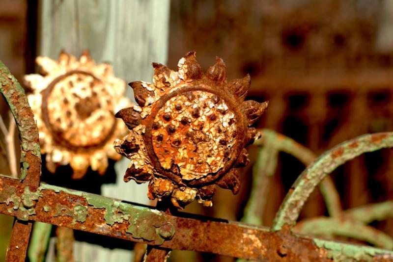 Iron Sunflowers