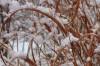 Snow on the native prairie