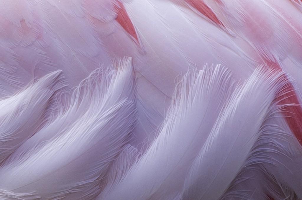Flamingo 1:1