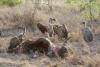 Life and death in Kruger National Park
