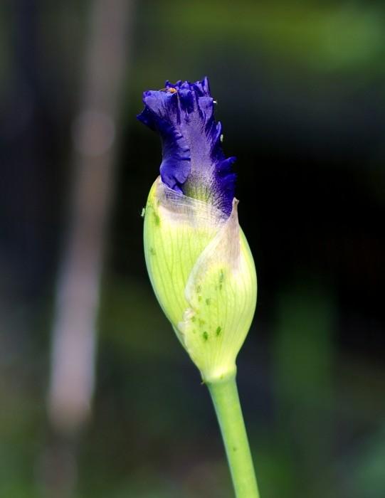 Emerging_Blue.JPG