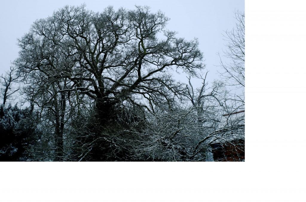 English countryside winter tree