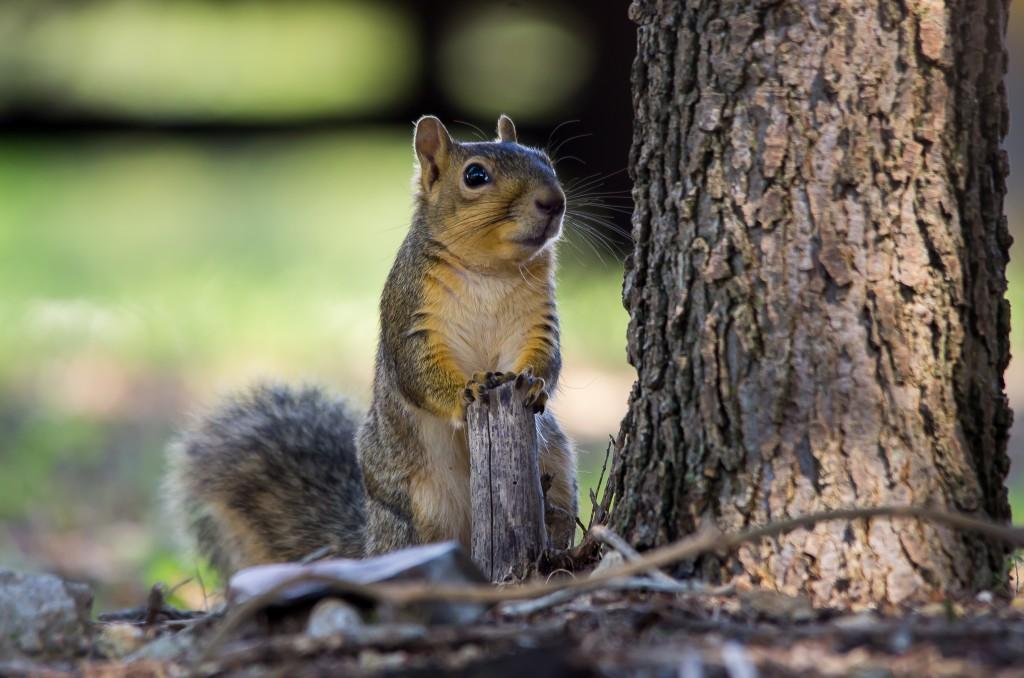 Squirrel On The Podium