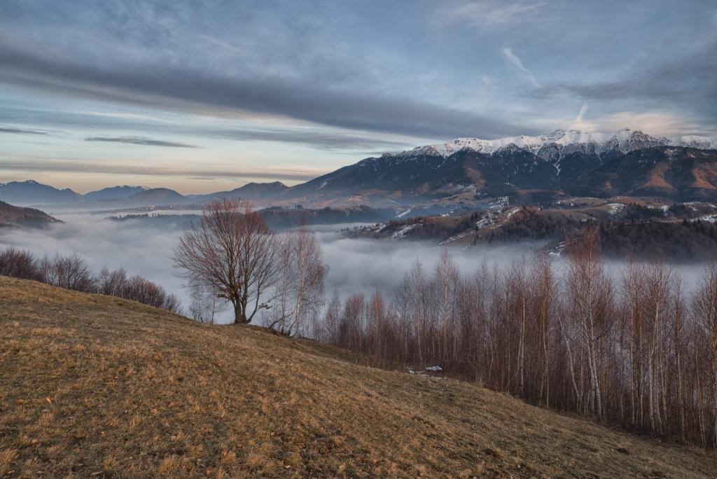 Mist Behind the Trees