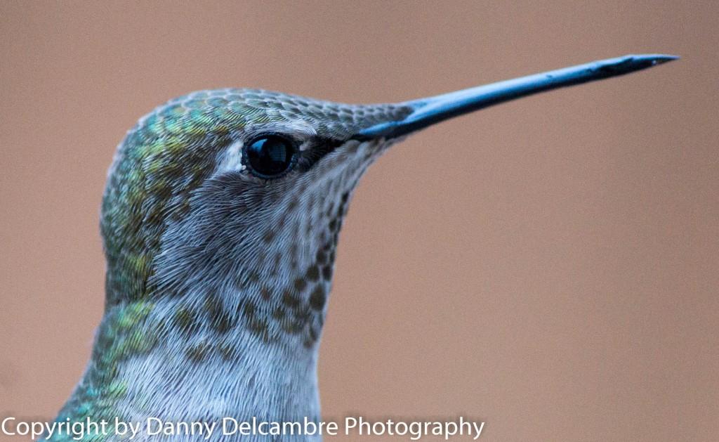 Close to Portrait of Hummingbird