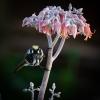 My flower....  get lost