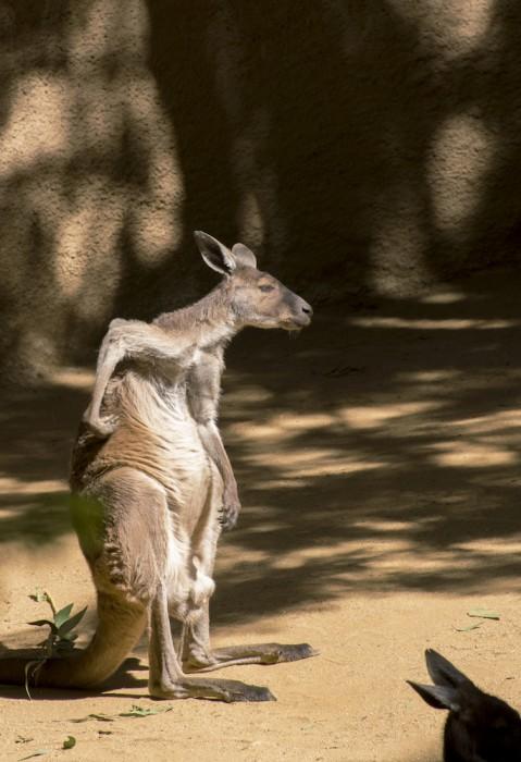 Self Portrait via Kangaroo
