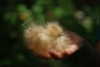 Rainforest mystery fluff