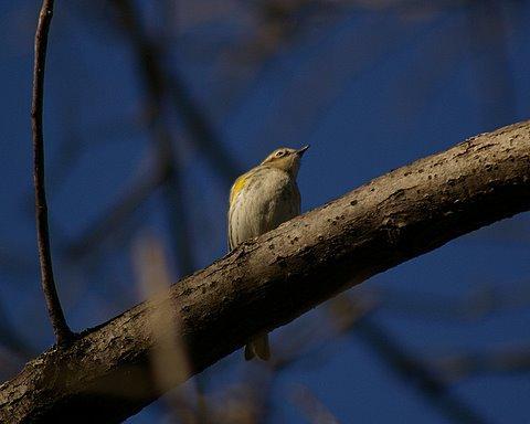 Bird in the back yard.