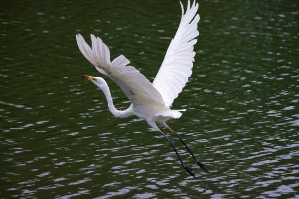 DA 55-300 Egret