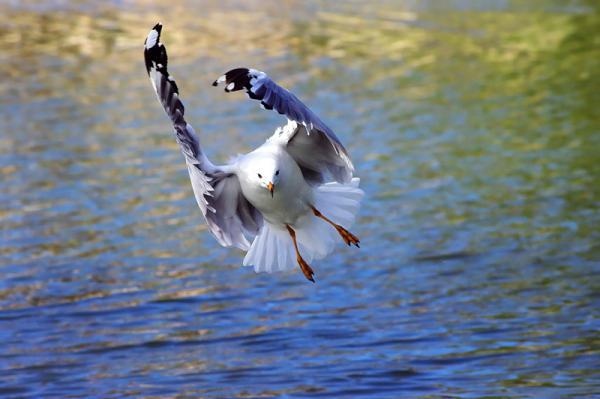 seagul posing