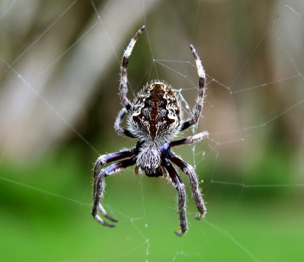spider at the door