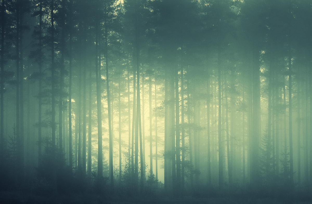 foggy forest by a - photo #9