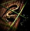 Bronze Lizard