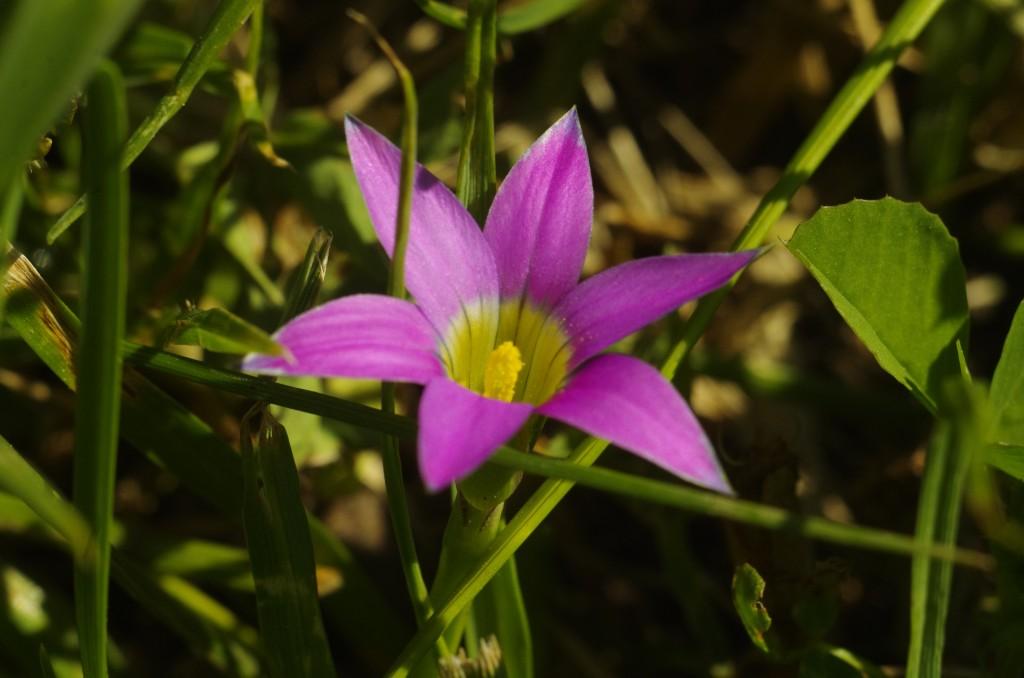 A clover flower